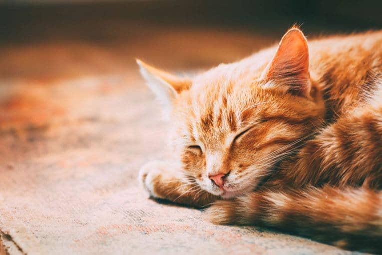 cat sleeping positions meaning