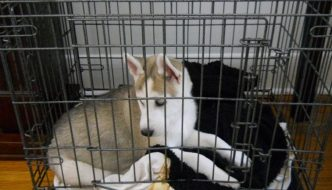 how to stop your dog from peeing in the crate