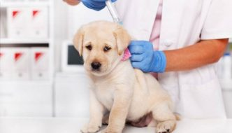puppy getting a vaccine