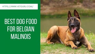 Best Dog Food for Belgian Malinois