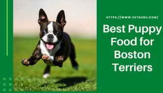 Best Puppy Food for Boston Terriers