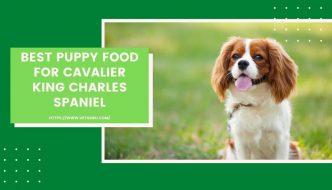 Best Puppy Food for Cavalier King Charles Spaniel