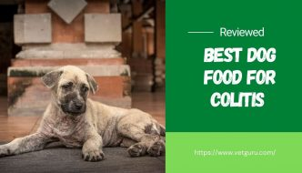 Best Dog Food for Colitis
