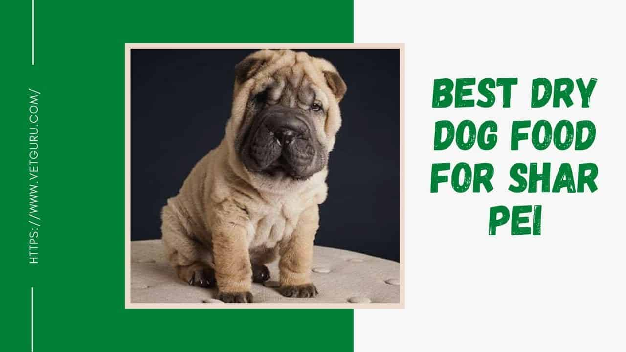 best dry dog food for shar pei