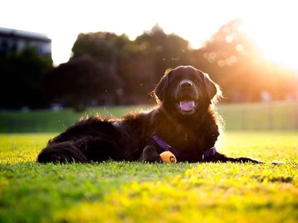 Give Your Dog Sunbathing