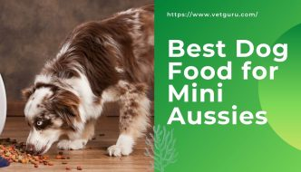 Best Dog Food for Mini Aussies