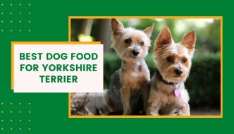 Best Dog Food for Yorkshire Terrier