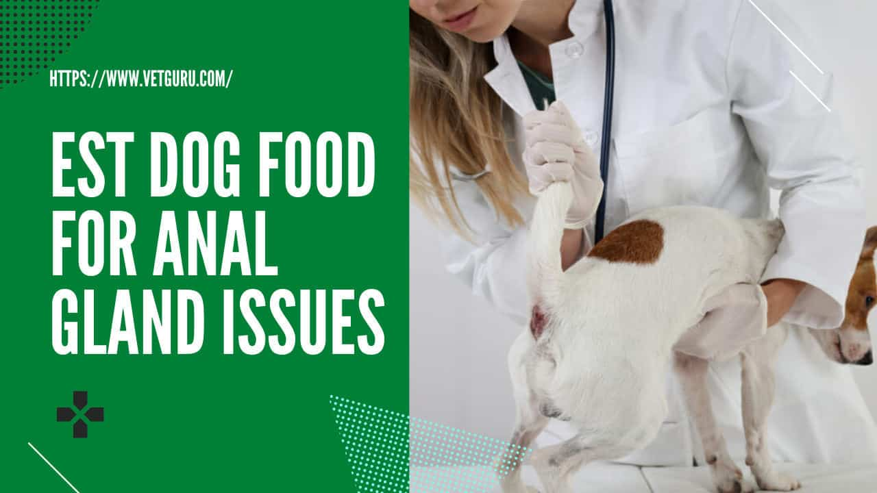 best dog food for anal gland issues