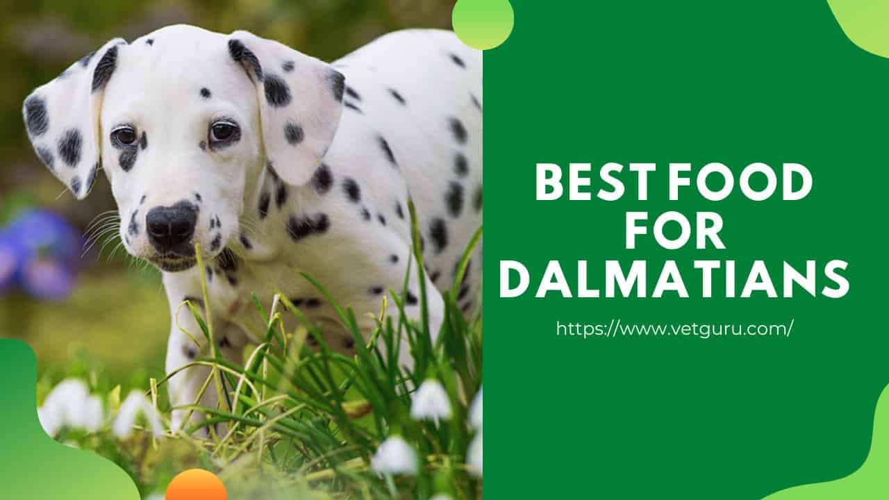 Best Food For Dalmatians