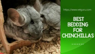 Bedding For Chinchillas