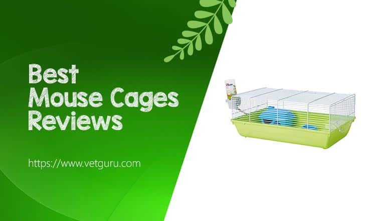 Best Mouse Cages Reviews