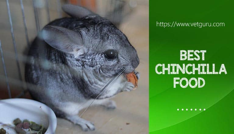 Best Chinchilla Food