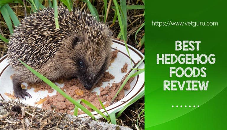 Hedgehog Foods