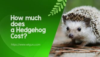 How much does a Hedgehog Cost?