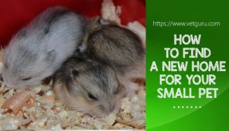 How to find a New Home for your Small Pet