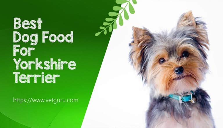 Dog Food For Yorkshire Terrier