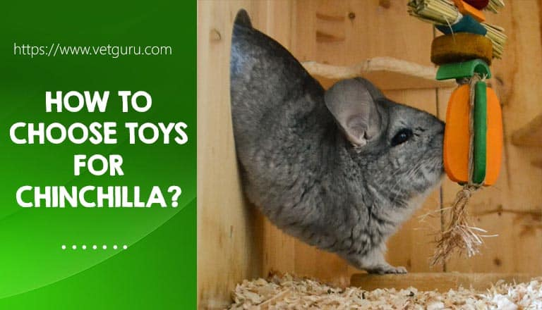 How to Choose Toys for chinchilla