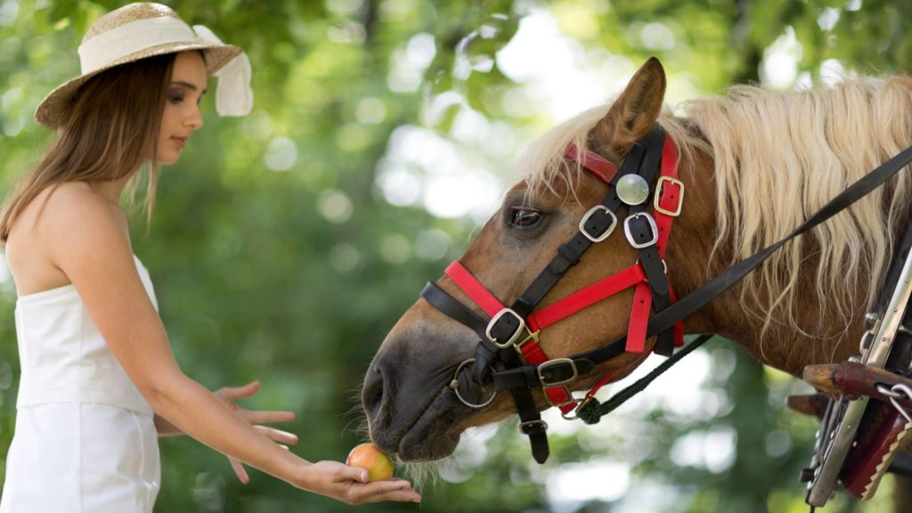can horses eat celery 1