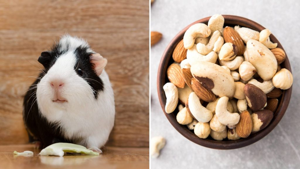 Are Nuts bad for guinea pigs_