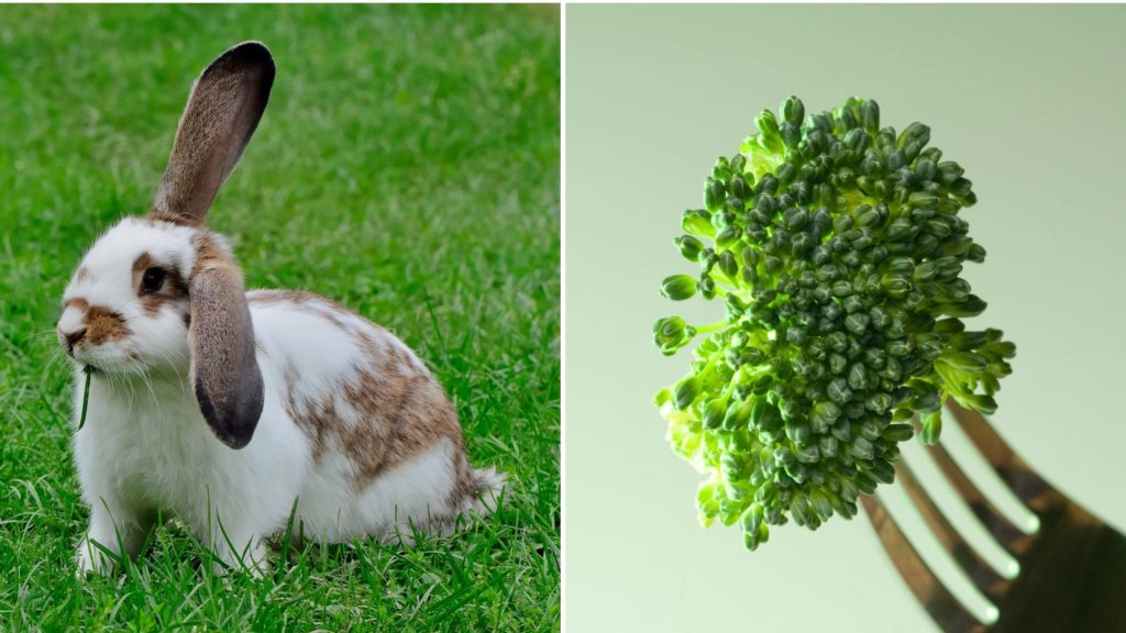 Can I give my rabbit broccoli