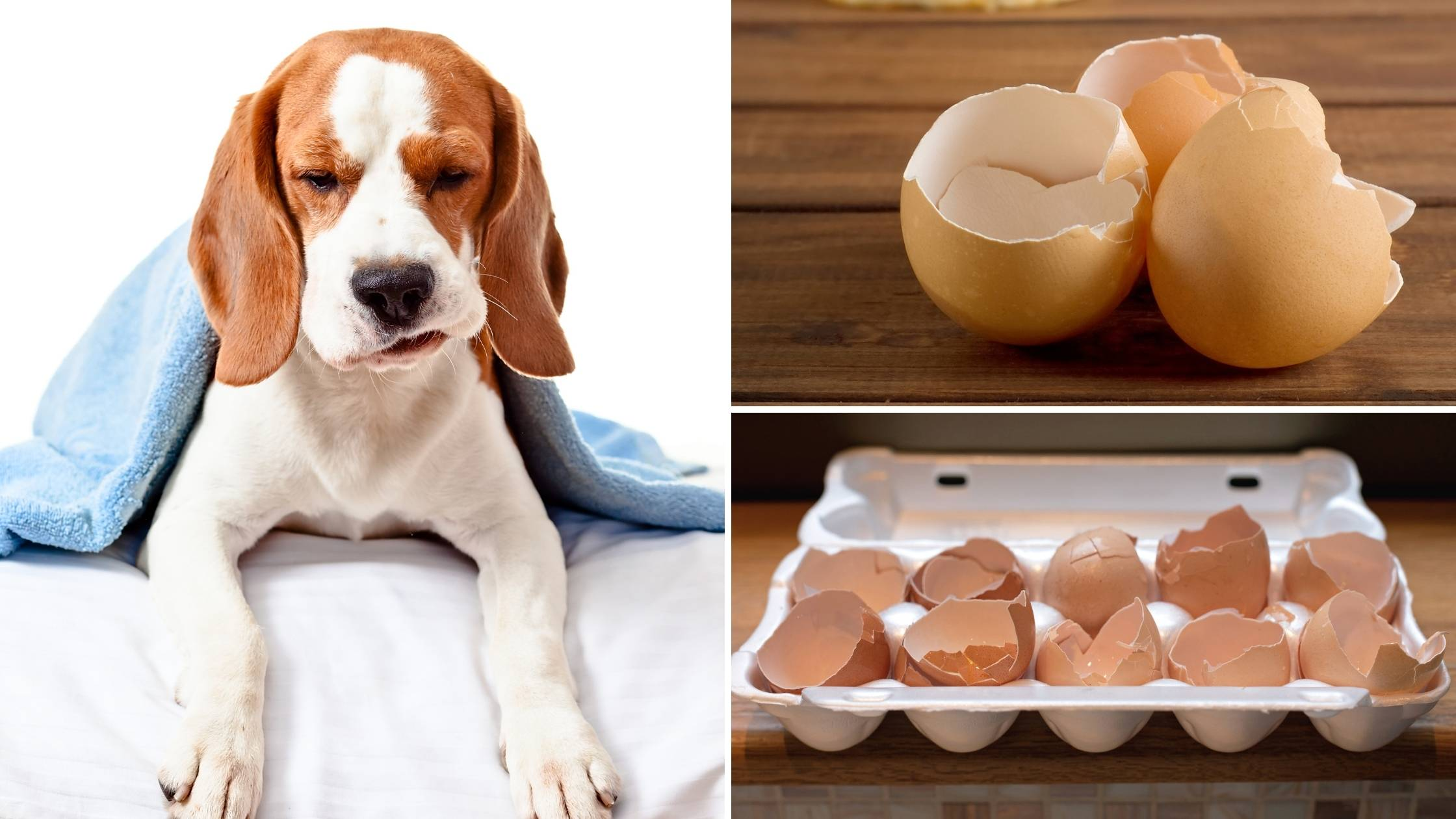 Can dogs eat egg shells