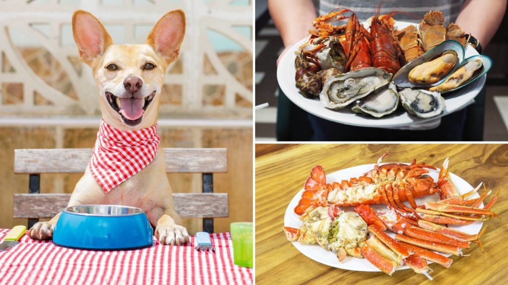 Can dogs have cooked seafood