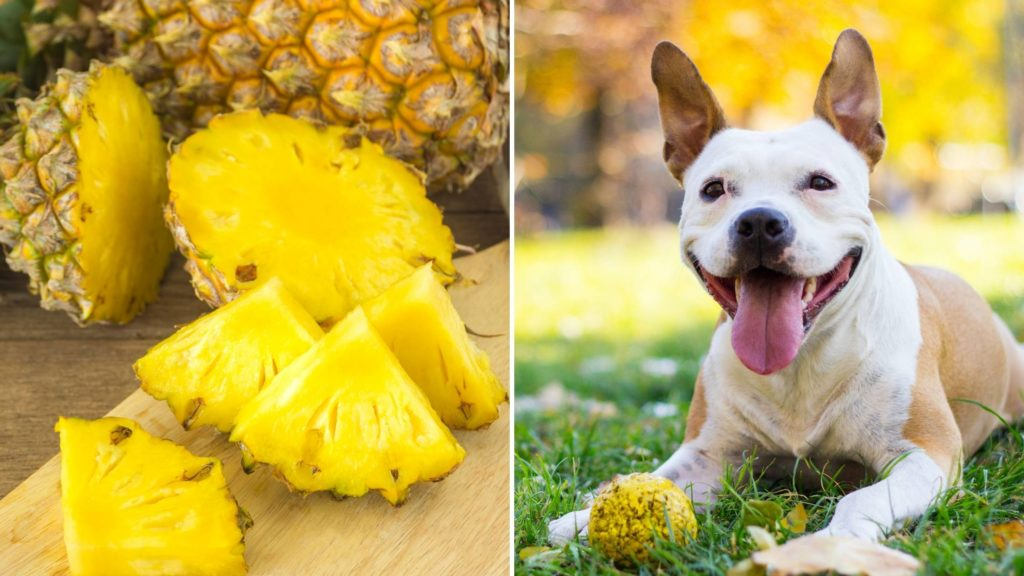 Can dogs have pineapple_