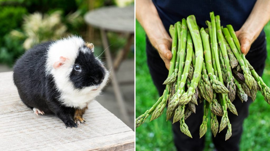 Can guinea pigs eat the whole asparagus