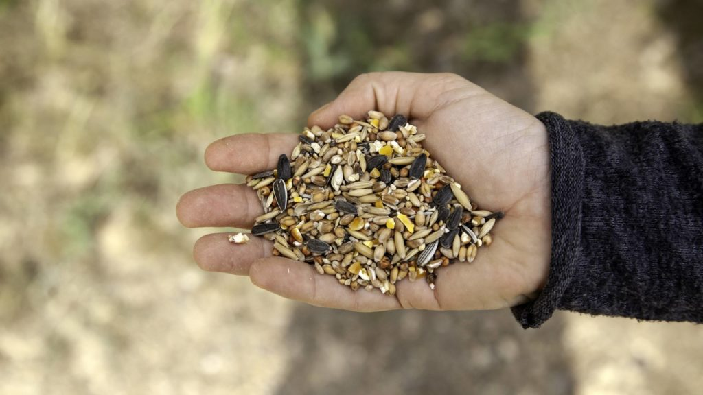 Is birdseed bad for dogs