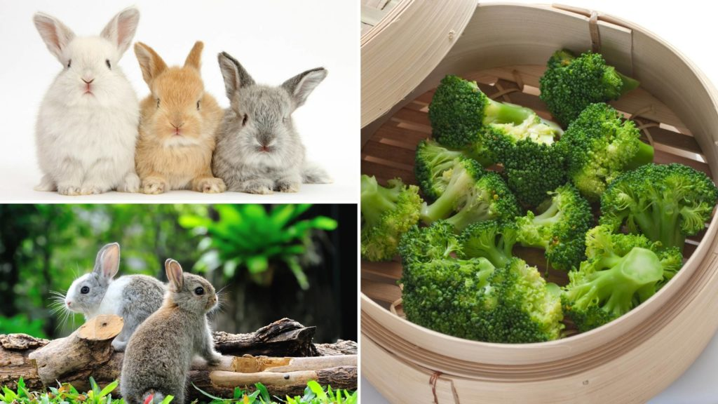 Is broccoli bad for rabbits