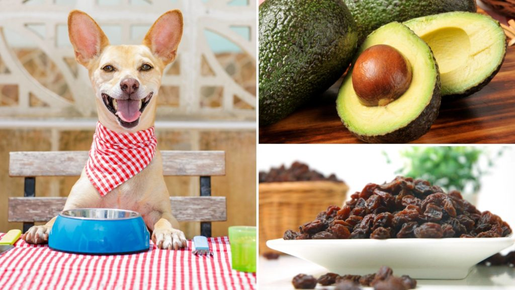 What fruit can dogs not eat_ (2)