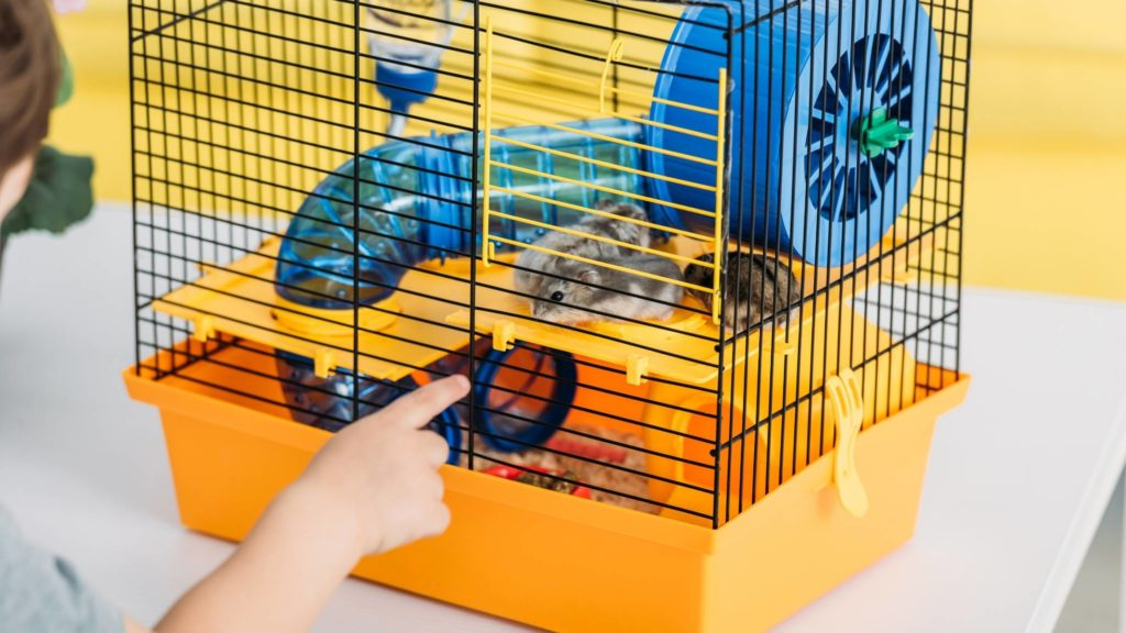 What is the best size cage for a teddy bear hamster