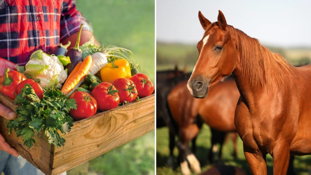 What vegetables can horses not eat_