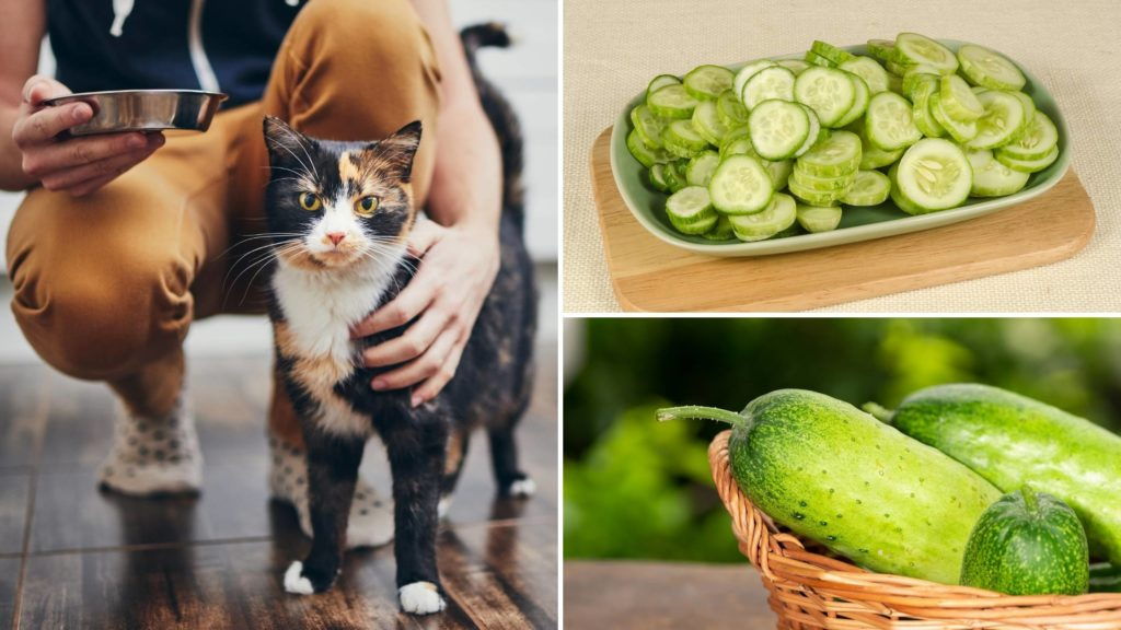 Why you shouldn't put a cucumber by your cat
