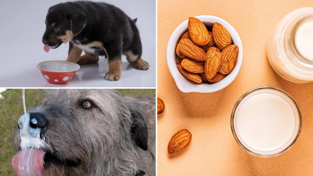 almond milk for dogs