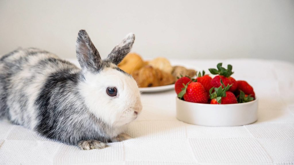 are strawberries good for rabbits