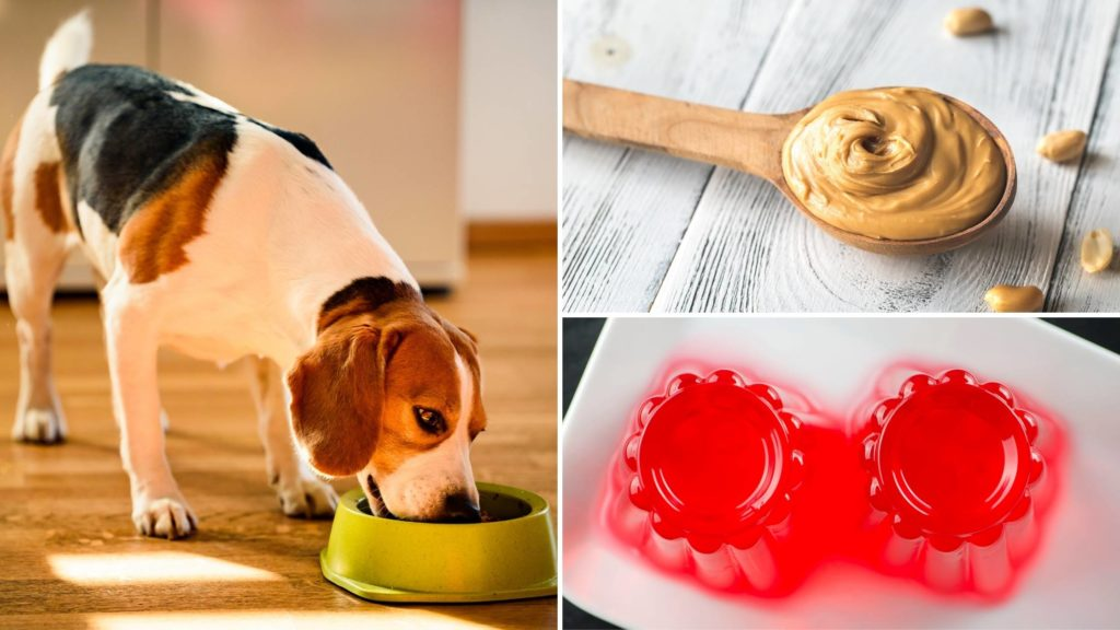 can dogs eat peanut butter and jelly