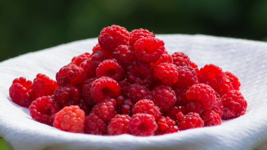 can dogs eat raspberries (2)