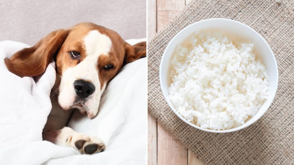 can dogs have jasmine rice for diarrhea