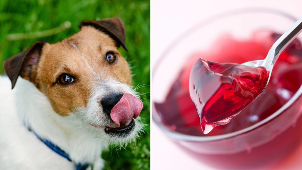 can dogs have jelly