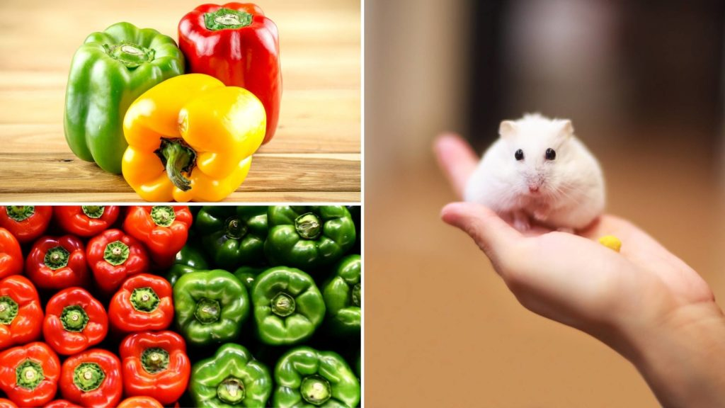 are peppers ok for hamsters