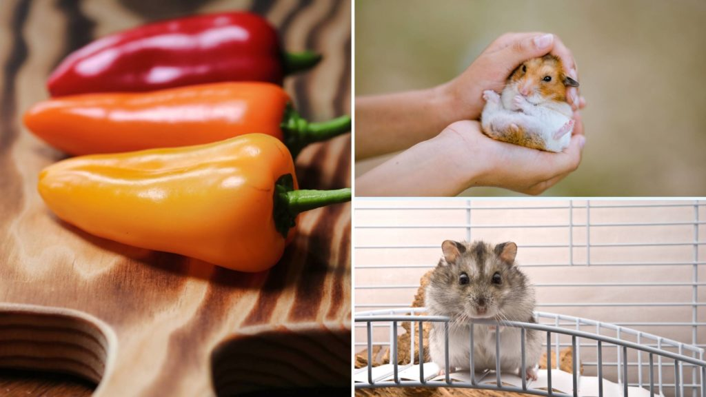 hamsters and peppers