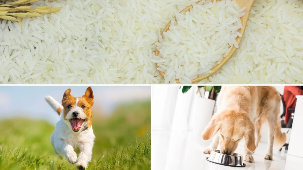 can i feed my dog jasmine rice