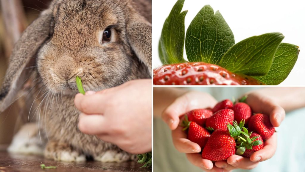 can rabbits eat strawberry leaves