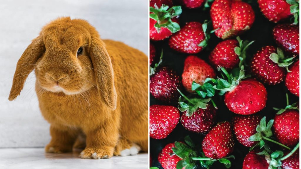 can rabbits eat strawberry tops