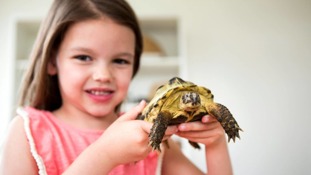 how much does a pet tortoise cost