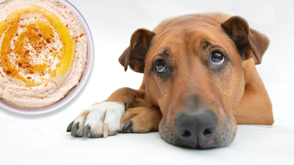 is hummus bad for dogs