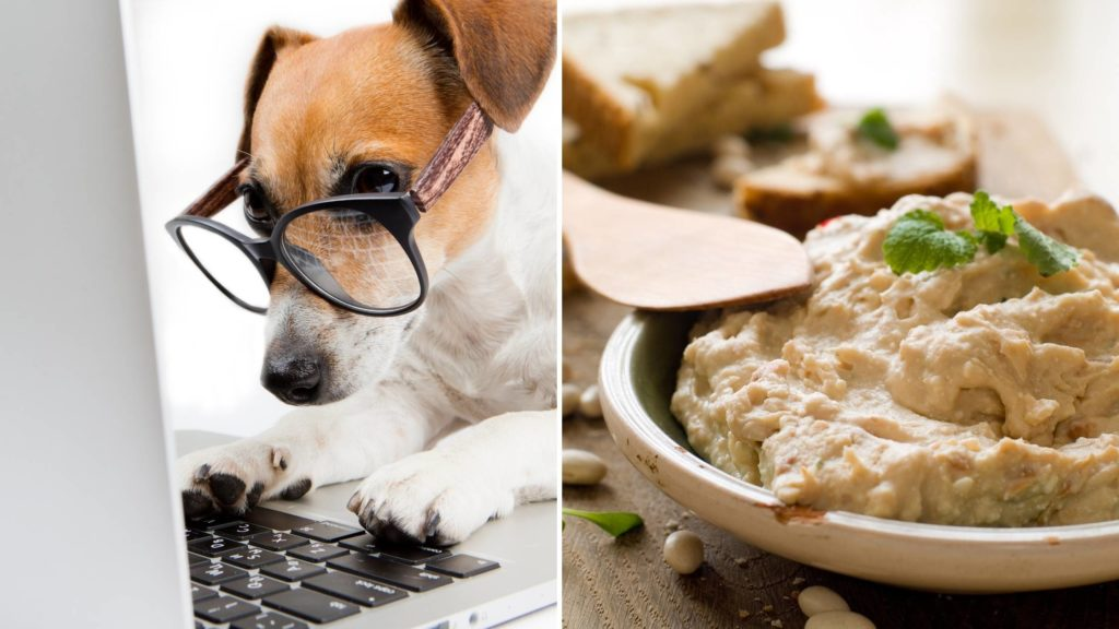 is hummus safe for dogs