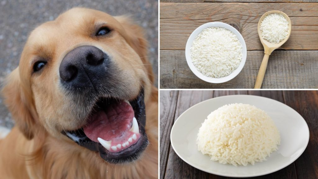 is jasmine rice good for dogs