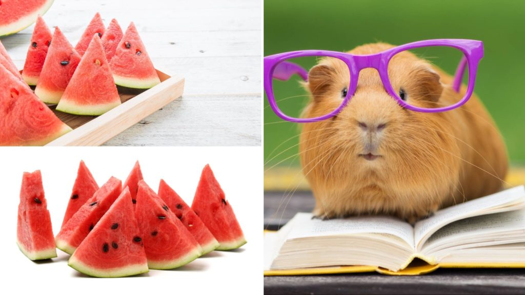 is watermelon good for guinea pigs